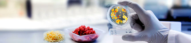 Análise microbiológica de carne bovina
