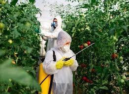 Análise de resíduo agrotóxico em alimentos