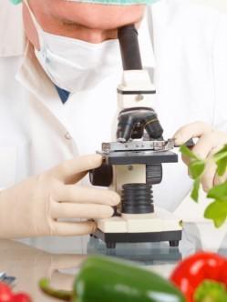 Analise de alimentos contaminados